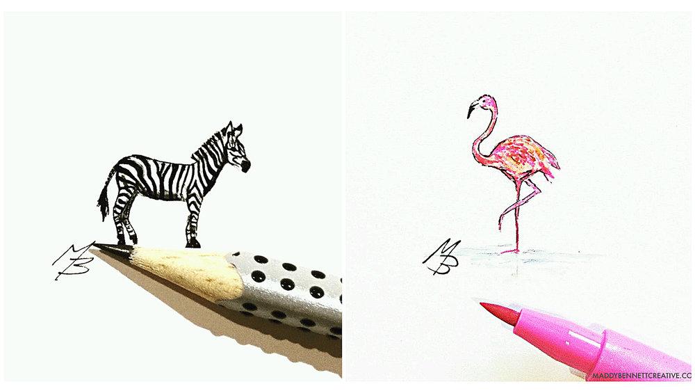 zebra and flamingo.jpg