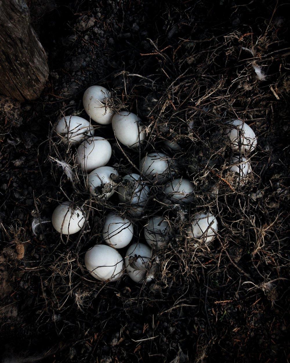 Eggs galore.jpg