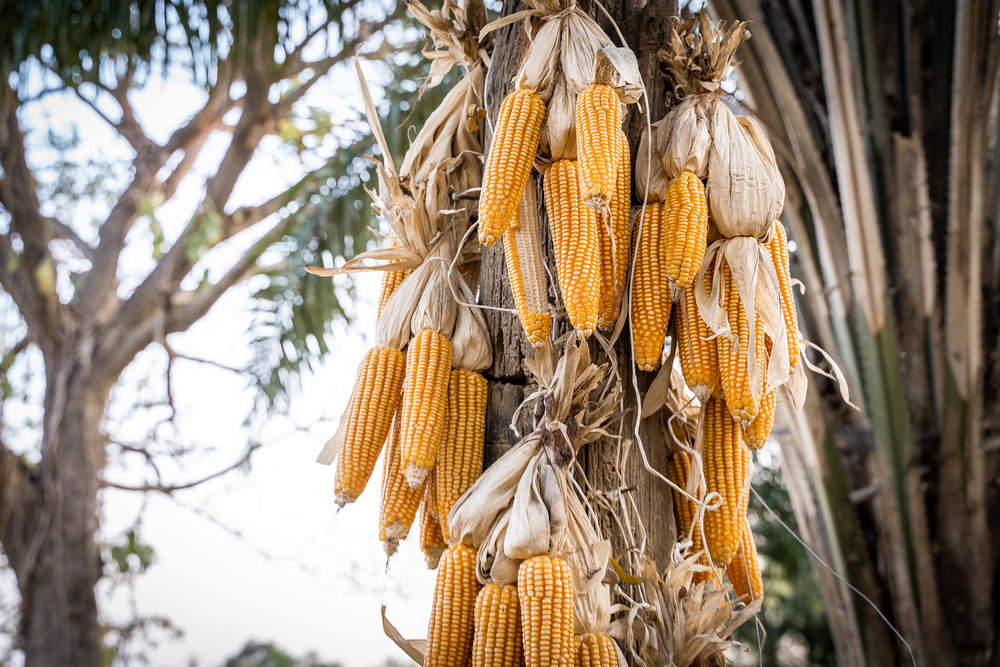 2019-02-10 - Vegan Town Lampang-Maik-Kleinert-photographer-videographer-73-2048px.jpg