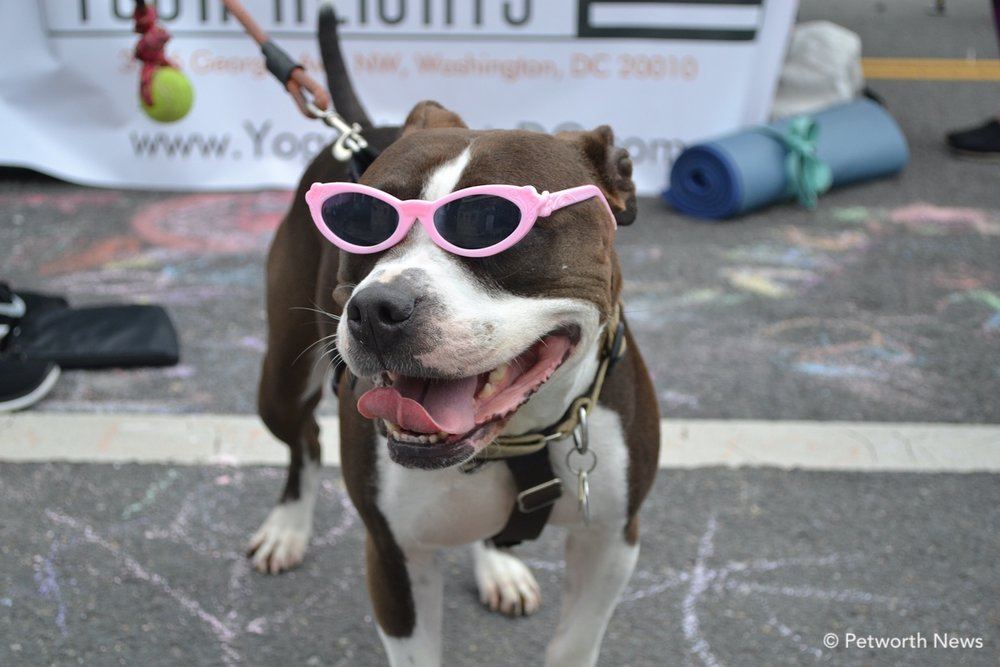 Dog show & Contest -