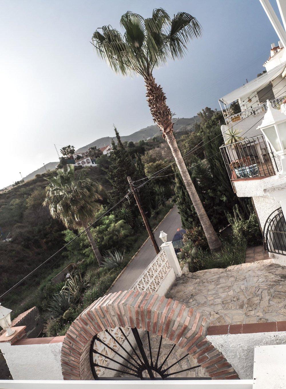 palms, street, photography, summer, happ