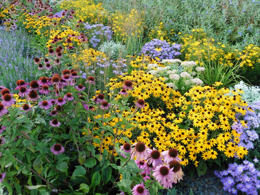 NATIVE PERENNIALS