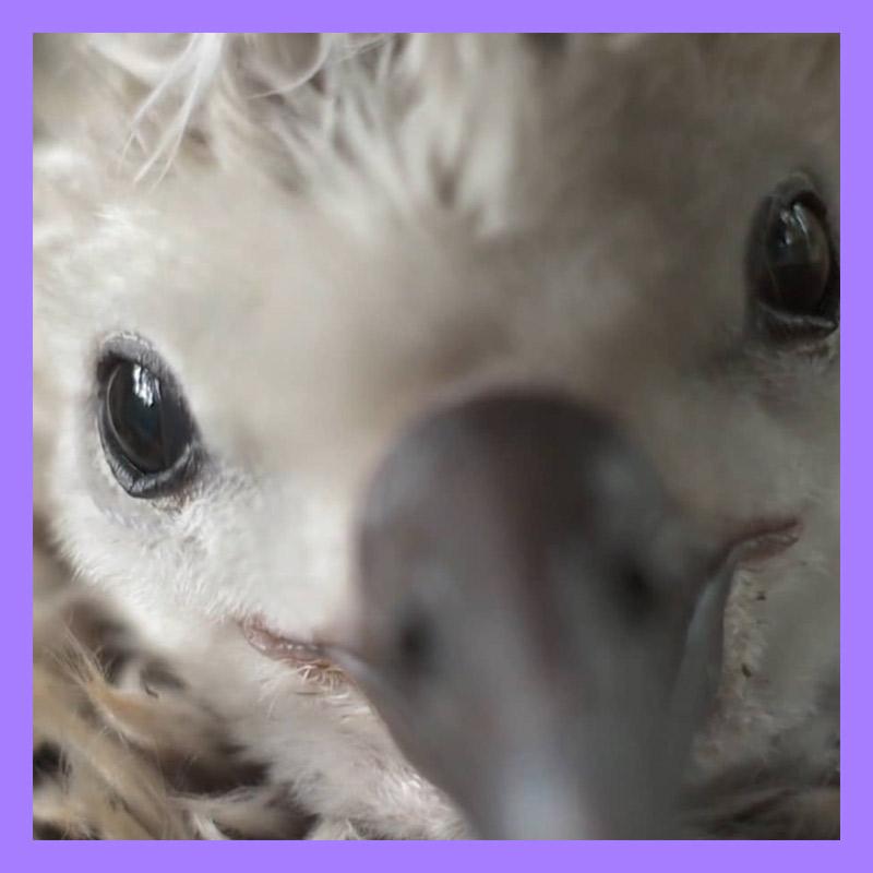 Albatross_Purple.jpg