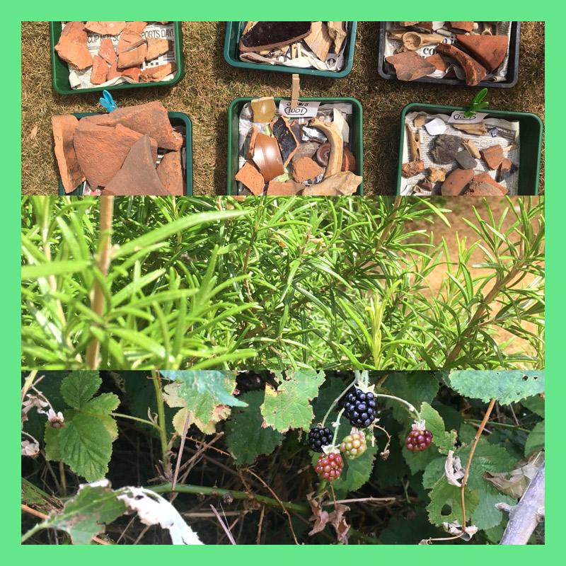 Picking-and-digging_Green.jpg
