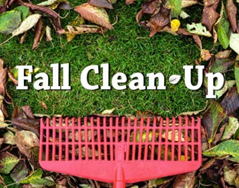 fall-clean-up.jpg