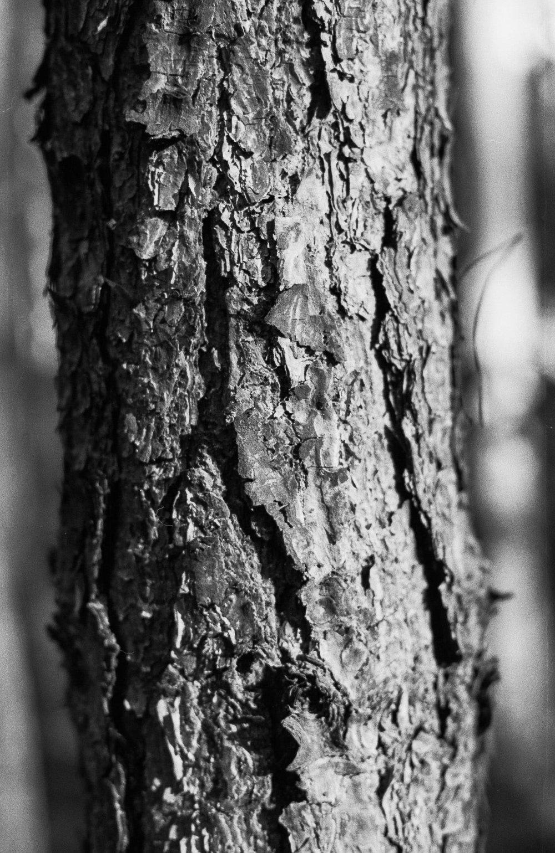maciej-sobol-fotograf-slubny-krakow-2018-07-09-0015.jpg