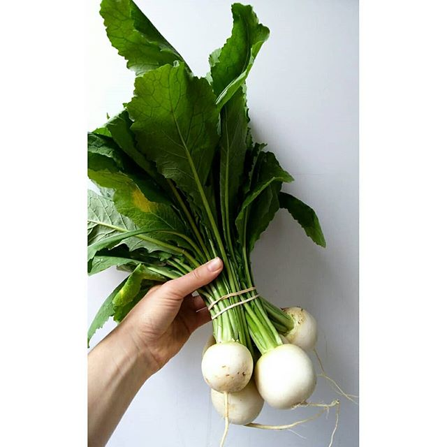 hands are awkward. here are some turnip glamour shots. I bit one and it was sweet. now to kill them with fire.
