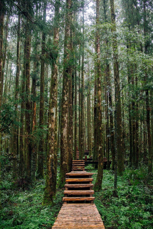 bosque viaje interior.jpg