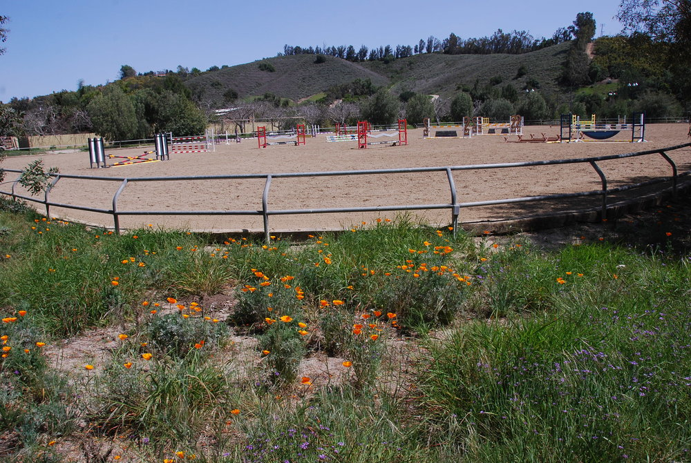 California Poppies overlooking the North West Jumping Arena