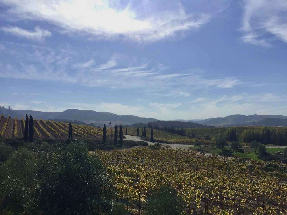 revisit-wine-co-clospepe-vineyard.jpg