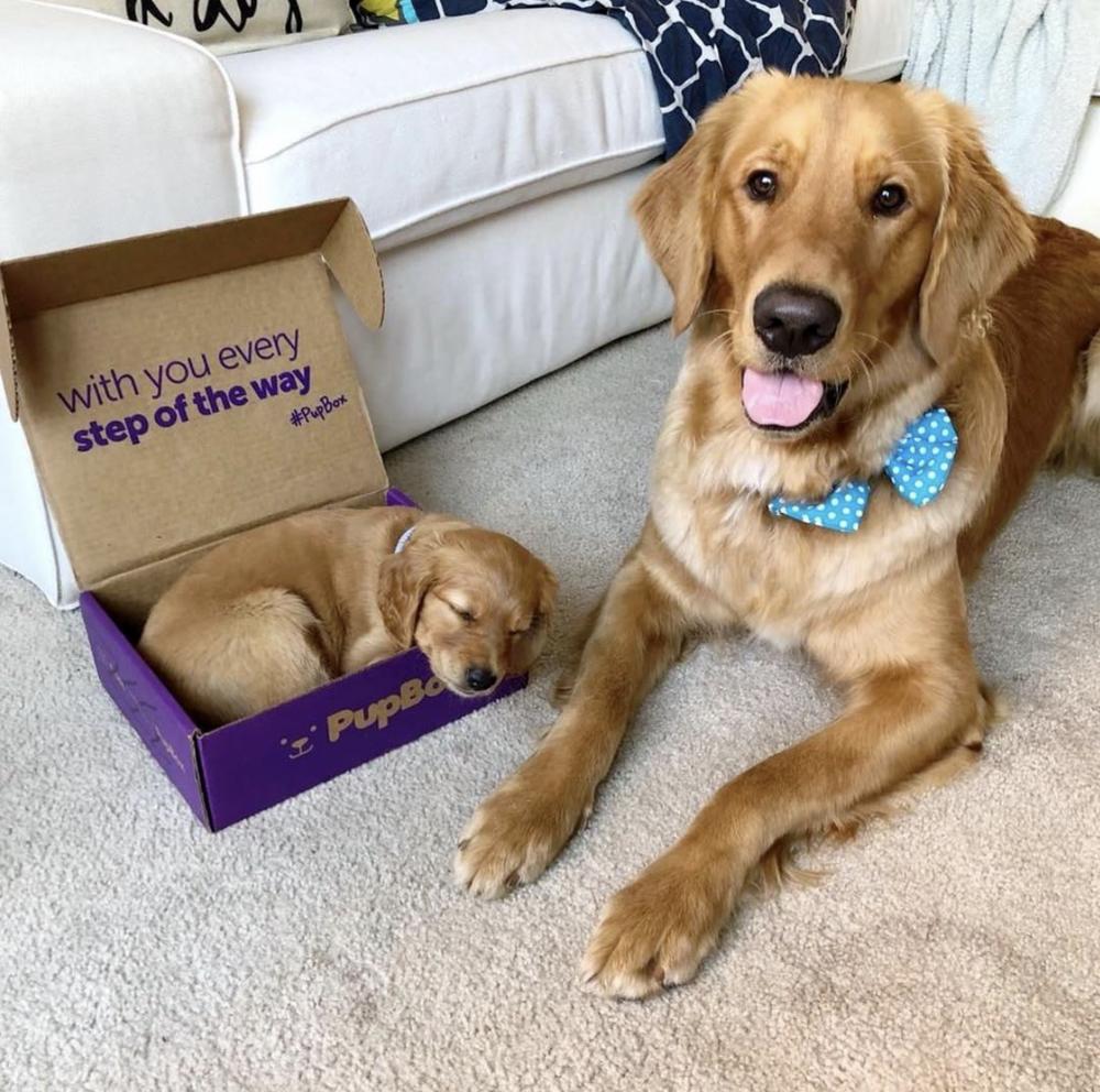 pup-box
