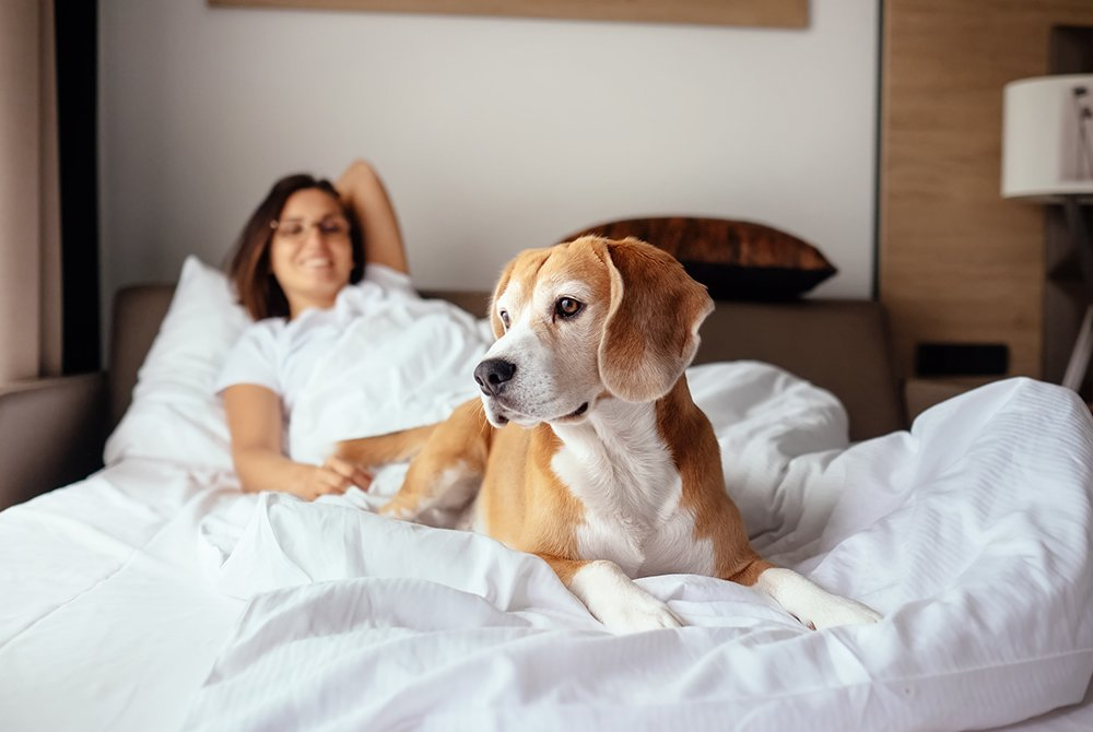 Owning-A-Pet-iStock-859900716 copy.jpg