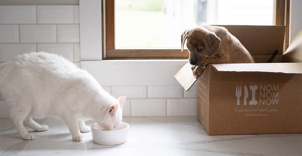 White cat eating food while a brown dog watches from a box