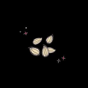Almonds illustration