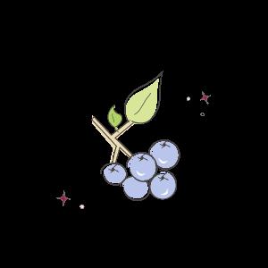 blueberries illustration