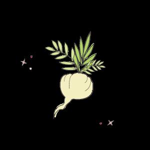 Maca root illustration