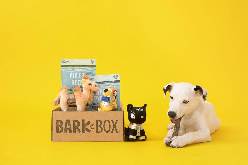 Dog-and-BarkBox.jpg