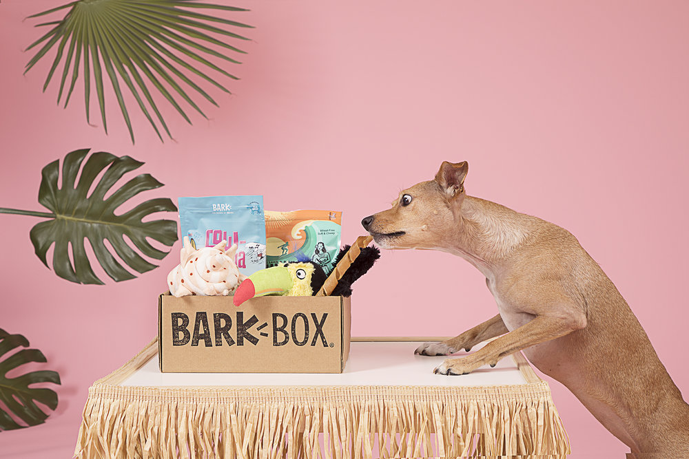bark-box-dog-delivery-box