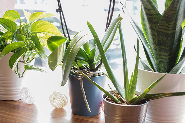 10 Low Maintenance Plants That Don't Require A Green Thumb