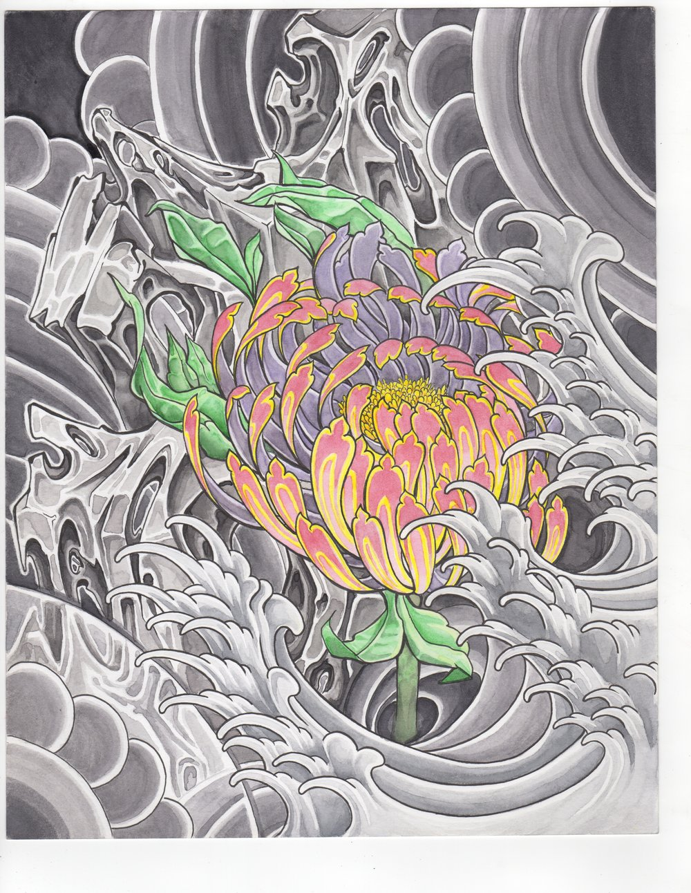 Chrysanthemum on Rock