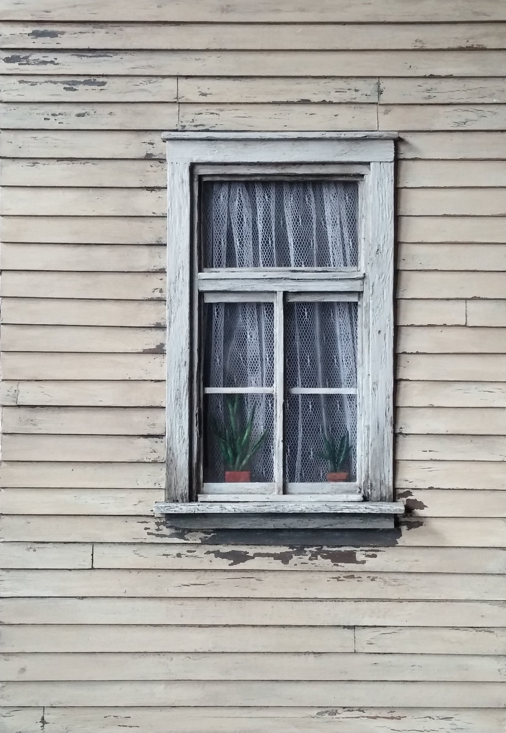 Weathered Window with Plants
