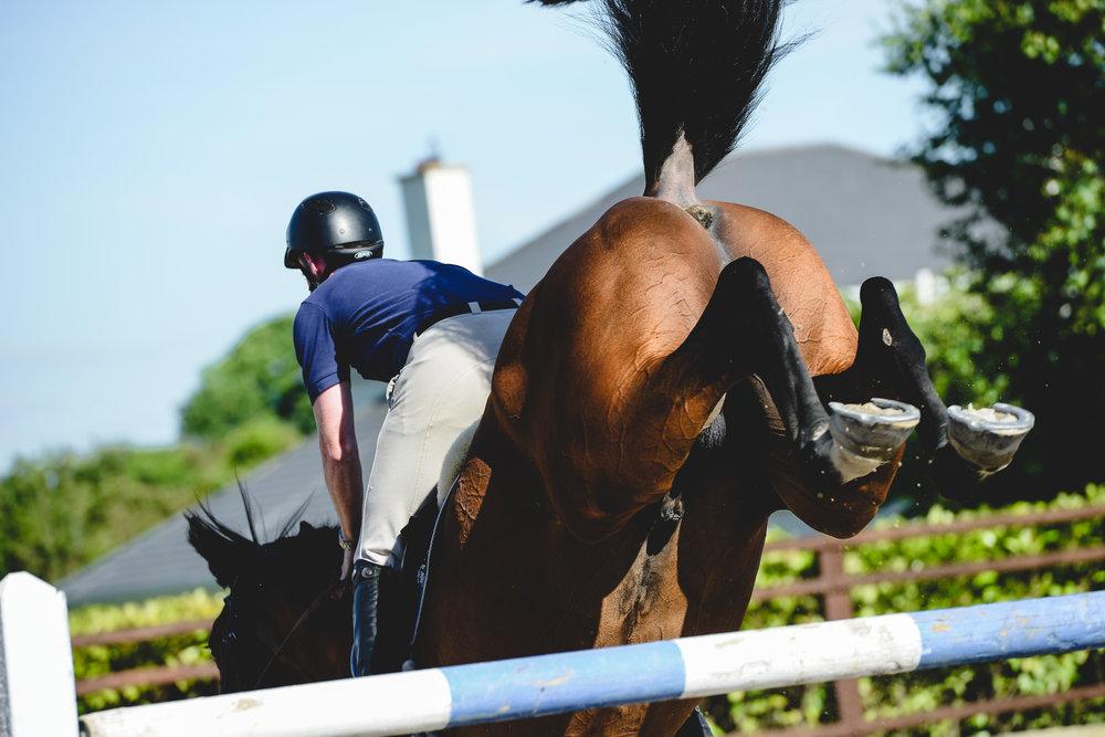 Sporthorses -