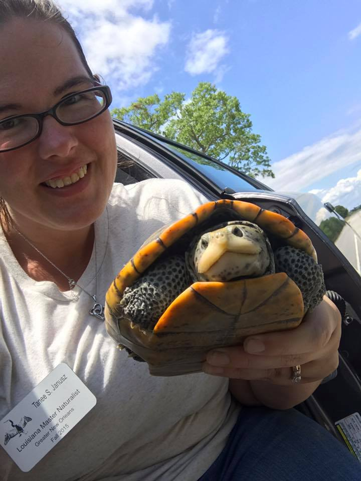 Me helping a Diamondback Terrapin across the road in Lake Catherine. These guys are hard to find so helping her was a great pleasure!