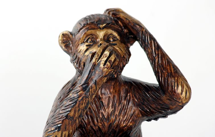 monkey-987886__480.jpg