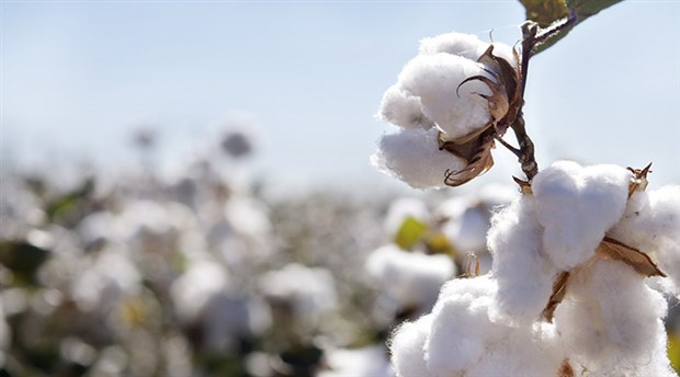 Quality... - Farm to Bedroom we have the highest standards in long staple certified organic cotton. We specialize in 300TC and 400TC organic cotton linens for hotels, but we are not limited. You imagine we create.