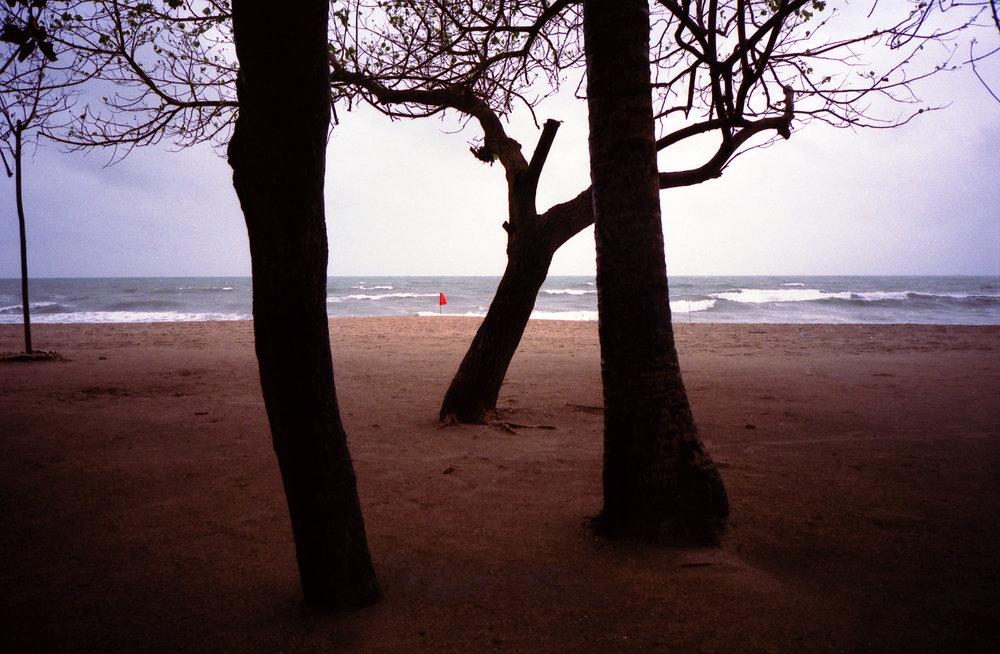 treeskutaSS.jpg