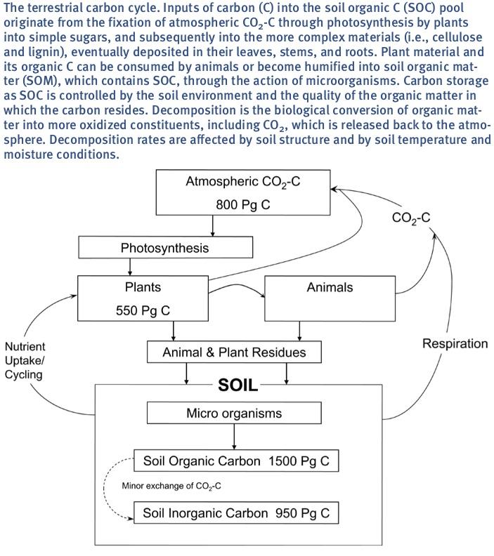 Carbon Seq Cycle Flow Chart.jpg