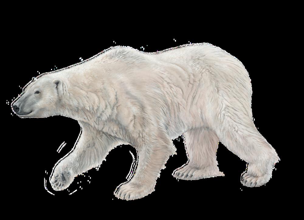 Polar Bear Sticker.png