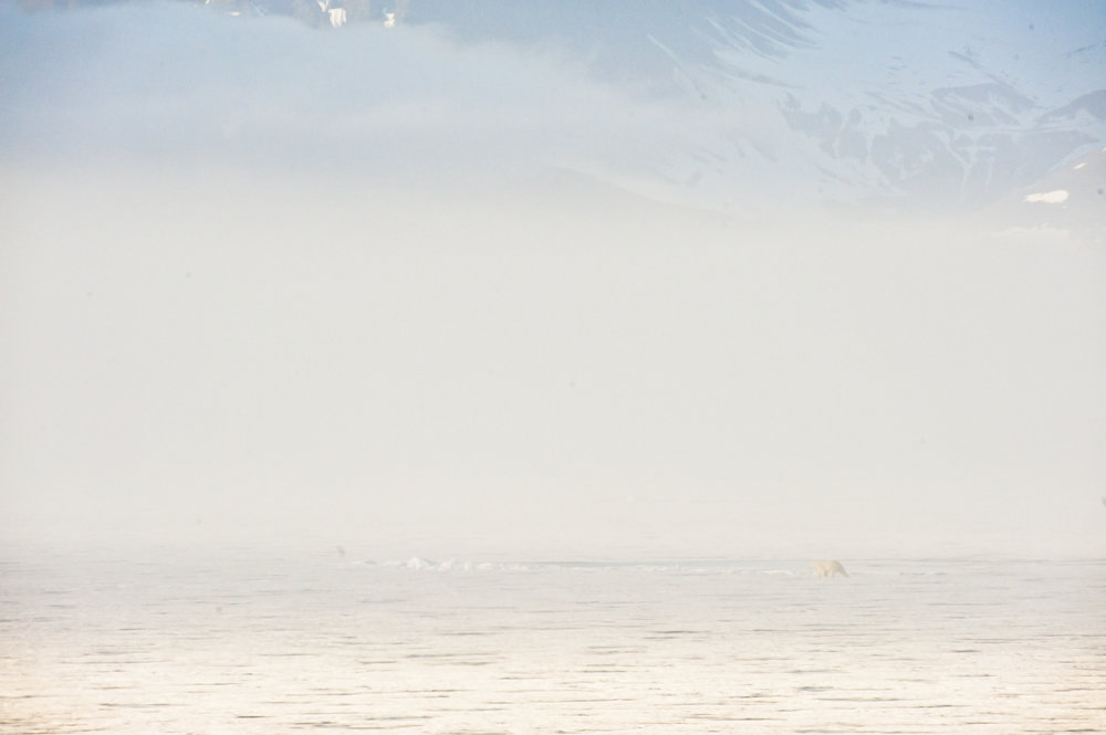 Polar Bear in White-Out Fog