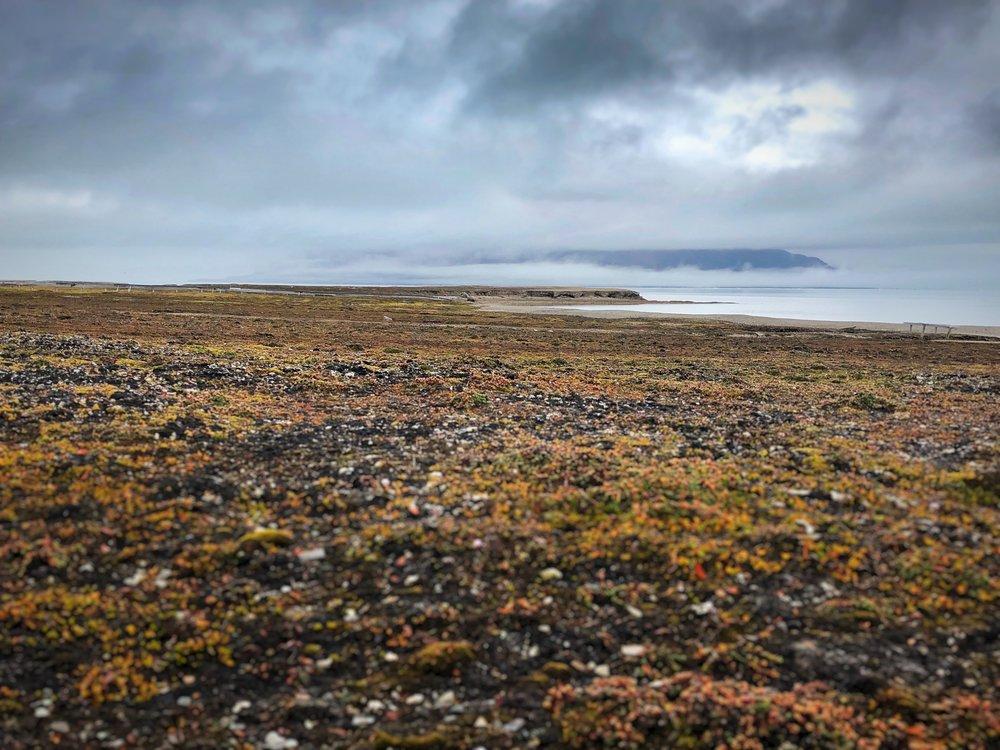 Ambiance —Ny Ålesund