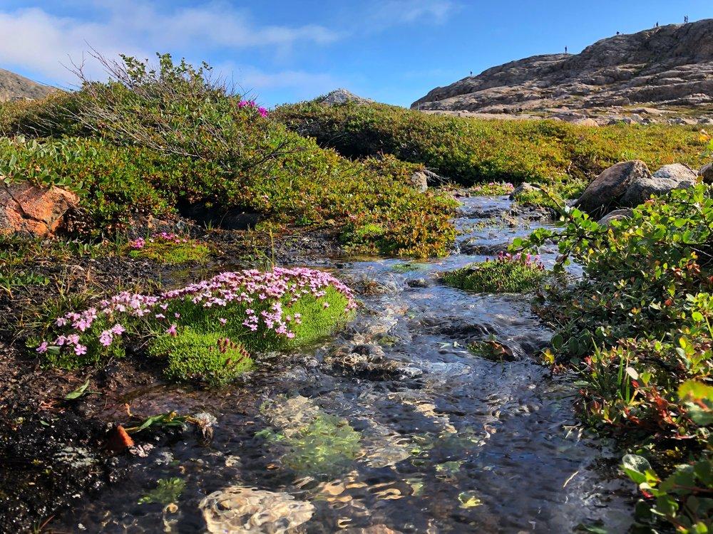 Tundra Meltstreams