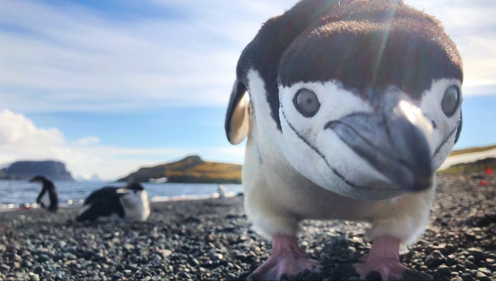 • see the latest photos from • - AntarcticA