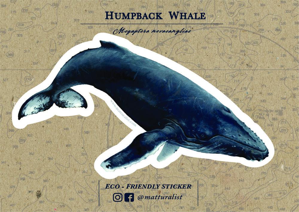 Humpback Sticker Backing_Humpback Front.jpg