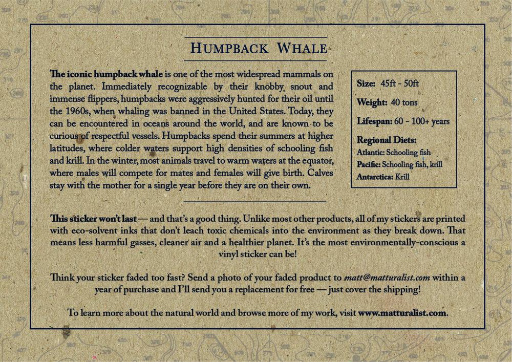 Humpback Sticker Backing-11.jpg