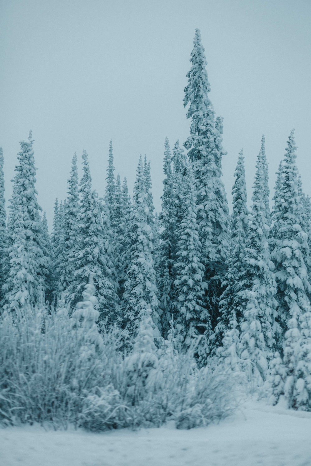 15 | Winter Wonderland - With a certain lack of snow in Vancouver and surrounding, I found myself shooting this on our to Kelowna, beginning of December. We took the Yellowhead highway, up the mountain and found ourselves in this winter wonderland.British Columbia, December 2018.