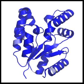 Biochemistry - Enzymology