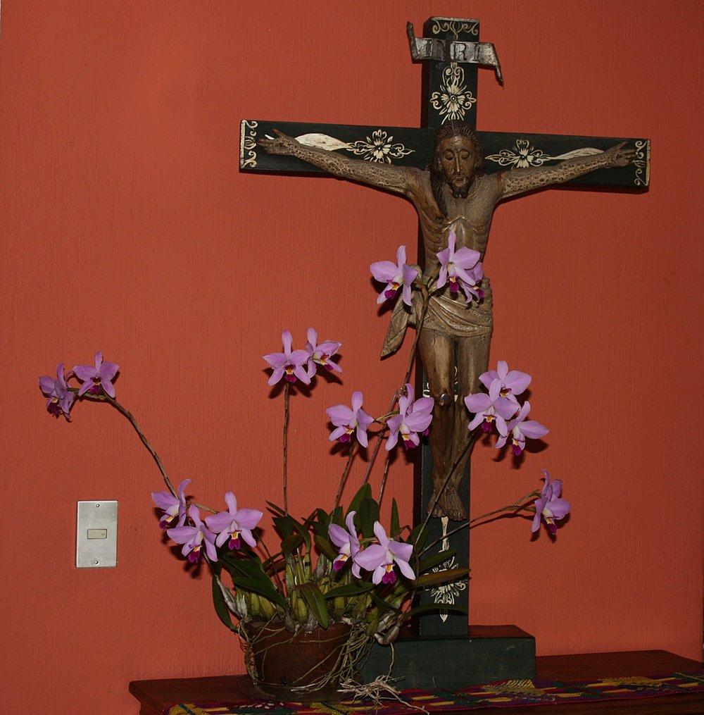 Laelia mottae  specimen with mid-19th century crucifix