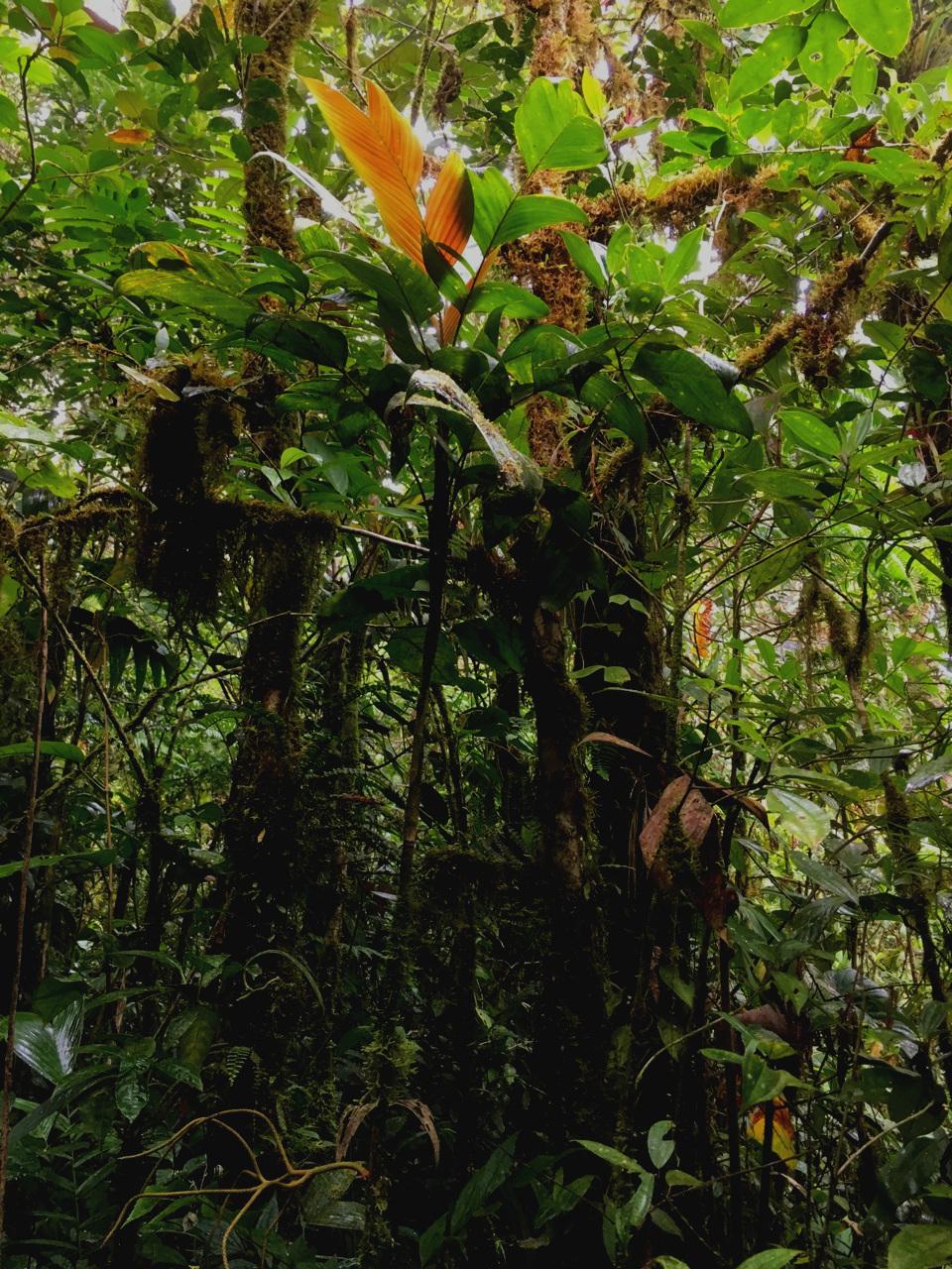 Backlit  Geonoma sp.  Costa Rica. (Image: F. Muller).