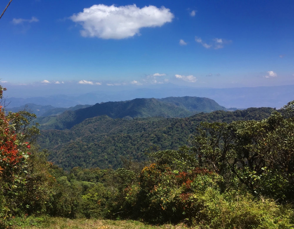 The Trifinio Biosphere upper elevation cloud forest block at the tri-border junction on the Pacific slope of northern Central America. Image: F. Muller.