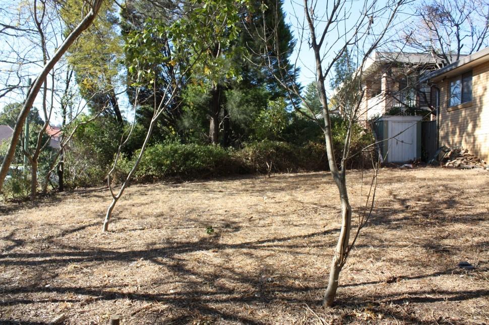 backyard2 before.jpg