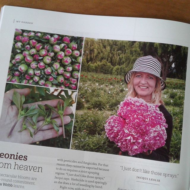 There is an awesome article in Wild Tomato this November about Paeonies!! 😉  #wildtomato #paeonies. #peonies  #peony  #loveMarlborough #marlboroughcelebrant #marlboroughnz #love #wedding #blenheim