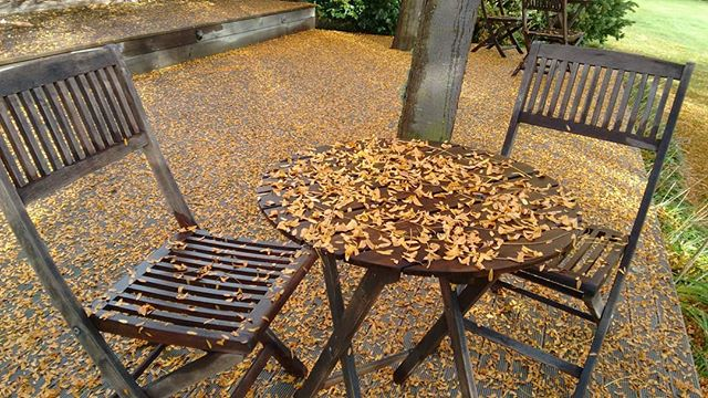 Ahhhh.... Autumn on the deck  #garden #lovemarlborough #autumn #love #blenheim #autumncolour  #marlboroughcelebrant