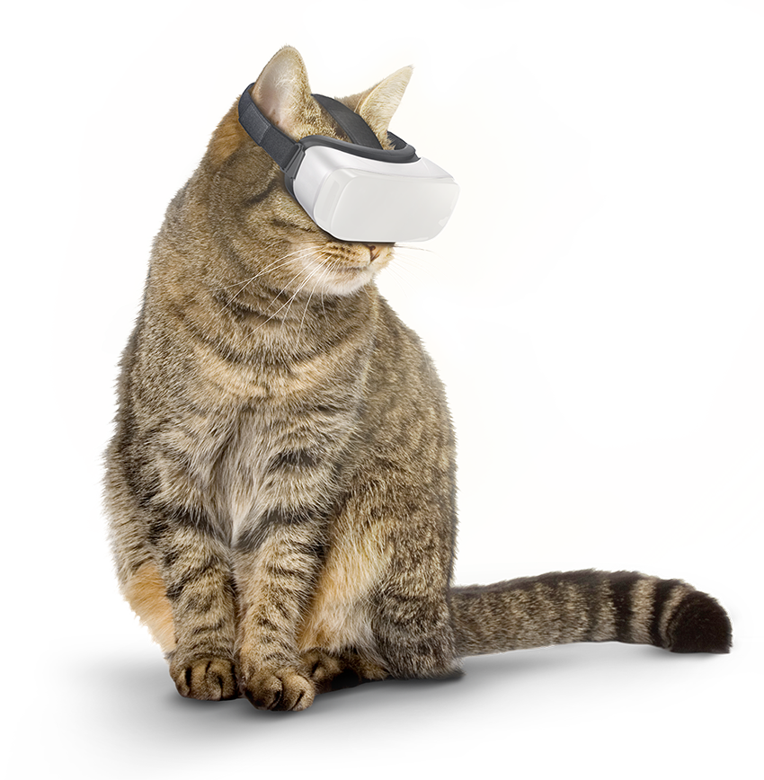 supercatvr_1.png