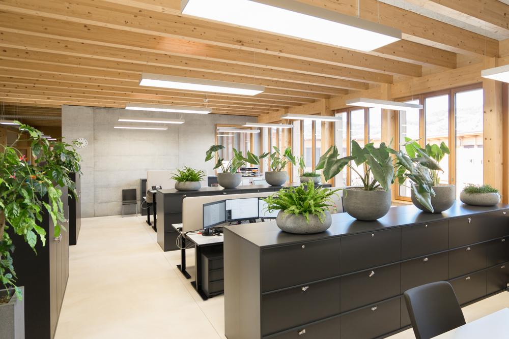 Bürobegrünung 2.jpg