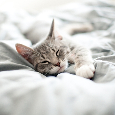 Hvor deilig hadde det ikke vært å bare være en liten pusekatt som sovner hvor som helst, når som helst?