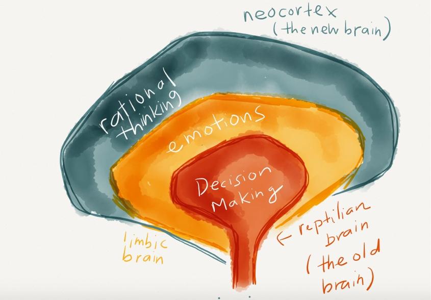 limbiske-hjernen-eteriske-oljer